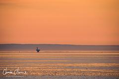 Tadoussac, le matin (Claude-Olivier Marti) Tags: tadoussac québec canada amériquedunord leverdesoleil sunrise horizon saintlaurent