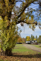 Peak foliage just after Thanksgiving (CN Southwell) Tags: napa valley rr railroad wine train california
