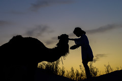 Feeding the camel at sunset (NightFlightToVenus) Tags: sunset enfan douz sahara saharien dromadaire chameau desert tunisia meharee mehari ngc camel