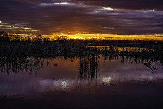 the sun sets over wetlands in Michigan
