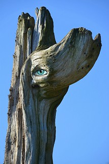 The Face Of Driftwood