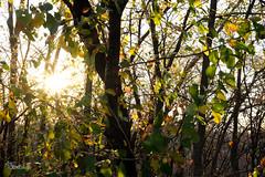 edits-0909 (RinEstellePhotography) Tags: arborhillsnaturepreserve arborhills nature fall red orange yellow sunset leaves unamusedboyfriend