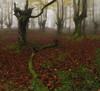 Controversia (Rafael Díez) Tags: españa paisvasco vizcaya orozko belaustegui hayedo arboles hojas otoño verde panorámica rafaeldíez filtro niebla fog