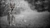 l'argent ,l'or, et la lumiere... (Pilouchy) Tags: largent lor lumiere foret wood forest nature wild animal free life vie regard chemin wolf story histoire couleur