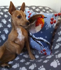 Miss Poppy with Christmas Robin (CraftyBev) Tags: cute sewing tapestry robin christmas poppy dog