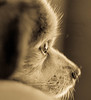 the LIght within (risaclics) Tags: make me smile 50mm18macro 7dw animals nikond610 november2017 risadogs monochrome makemesmile