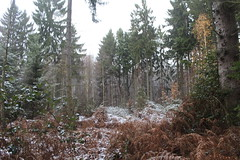 IMG_2036 (ihambi) Tags: hambi hambacherforst hambach hambacher kohleprotest earthfirst kohle occupation forestoccupation forest co2 coal climatechange climatecamp climate braunkohle breakfree solidarity