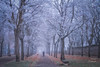 Cencellada (LANTADA Fotografia) Tags: persona niebla burgos arbol ciudad hielo jardin