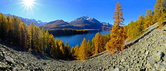 Those were days (ej - light spectrum) Tags: berge mountains lake see bergsee landschaft landscape autumn herbst himmel sky engadin silsersee 2017 october oktober fujifilm xt2 larkes lerchen golden panorama alpes alpen fujinon xf1024mmf4r larchtree lerchenwald graubünden schweiz switzerland