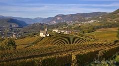 Südtirol (Rolandito.) Tags: europa europe italy italia italien italie südtirol south tyrol alto adige vineyards autumn fall herbst weinberge