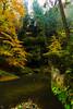 Im Polenztal (Dirk Hoffmann Fotografie) Tags: yellow saechsische schweiz saxony saxon switzerland saxonswitzerland sachsen polenz polenztal nature nationalpark autumn leaves leav forest colorful photography canon manfrotto elbsandstein germany wild landscape