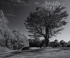 Tree (Tim Ravenscroft) Tags: tree blueridgemountains monochrome blackandwhite blackwhite hasselblad x1d hasselbladx1d