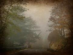 giocando con l'autunno (fotomie2009) Tags: autumn autunno ontheroad langhe langa cebana piemonte piedmont italy italia landscape ipiccy paesaggio textured texture edited