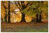 Un promeneur au parc (Jean-Marie Lison) Tags: eos80d bruxelles parcastrid arbres hêtres automne anderlecht