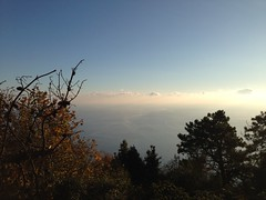 17 (emmess2) Tags: campiglia cinqueterre spezia autumn fall leaves