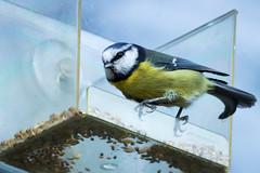 Back off! This is my food! (iantaylor19) Tags: brandon marsh warwickshire british birds sigma 150600 canon 80d