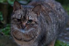 Cat (Ronan McCormick) Tags: ilobsterit canon cat cats catsofflickr ireland