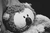 Monsignore Ururu Ruh' (xockisfriends) Tags: urururuh musician artist singer aria diva divus bird owl snowowl animal voice beautiful feathers portrait transcendent analogue film ilford hp5