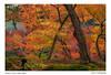 0S4A5683-P (ImagesSansWords) Tags: canon5dmarkiv damoophotography kyoto japan autumn autumnfoliage fallfoliage fallcolors colors nature mapleleaves fourseasons mapleleavesinfall autumncolorskyoto autumncolors