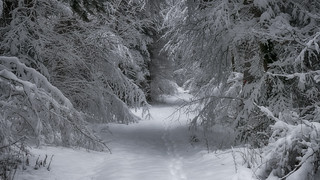 Dans la forêt enchantée...