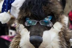 SAM_3152.jpg (Silverflame Pictures) Tags: hondachtigen castlefestwinteredition november 2017 costumeplay fursuiting cosplay wolf furry canidae furrie landgoedkeukenhof nederland lisse