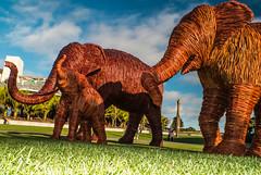 Wandering Willow Elephants (jimjiraffe*) Tags: sculpture willow woven elephants pukeariki landing newplymouth taranaki stevemanning fujifilm xs1 jimjiraffe