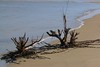 IMG_3204 (SweetMeow) Tags: harborisland sthelenaisland ocean beach cameraclub