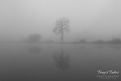 November 10, 2017 - Thick fog at St Vrain State Park. (Tony's Takes)