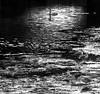 Icy Water (bjorbrei) Tags: water ice frost monochrome surface backlight swan seagulls bjørvika oslo norway