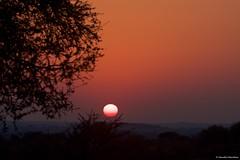 IMGP3309 African Sunrise (Claudio e Lucia Images around the world) Tags: sunrise sunset sun africansunrise mashatu mashatugr tuli tuliblock botswana africa tree pentax pentaxk3ii sigma sigma150500 pentaxart