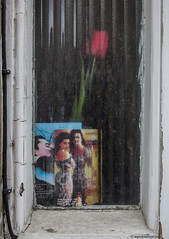 Tulips from Stepney Green © (wpnewington) Tags: eastend tulips windows memories stepney glass decay souvenirs