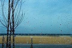 Melancholy (stedef) Tags: rain pioggia mare sea dubai albero tree goccia tear inverno winter malinconia melancholy