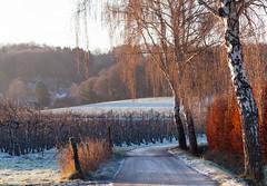 Hastenrath - Winterimpressionen (PHOTOGRAPHY Toporowski) Tags: landschaft sonnenaufgang germany nature ice sonnenuntergang landscape winter deutschland natur eis sunrise eschweiler nrwnordrheinwestfalen deu