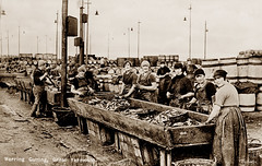 Herring Gutting, Gt Yarmouth (footstepsphotos) Tags: yarmouth norfolk herring fish gutting fishing industry girls ladies barrel workers old vintage postcard historic england