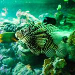 Aquarium of Genoa thumbnail