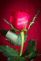 Happy Birthday Rose (Lens Daemmi) Tags: happy birthday rose label beschriftung golden