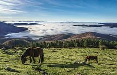 Urkiolamenditik (Jabi Artaraz) Tags: jabiartaraz jartaraz zb euskoflickr urkiolamendi yeguas pottoka horse bruma niebla luz light nature naturesfinest otoño udazkena mañana
