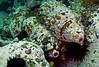 P1014098.bmp (LoxPix2) Tags: loxpix australia bareisland scuba diving sydney artilleryshells