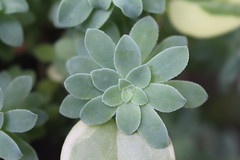 (marcela_ng) Tags: nature natureza natural minasgerais brumadinho succulent suculenta succulents green verde brasil brazil
