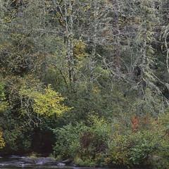 Cullasaja scene (baro-nite) Tags: cullasajariver westernnorthcarolina nantahalanationalforest fallcolor mediumformat film e6 fujifilm velvia rvp50 pentax 645n smcpentaxa645135150mm epsonv700 affinityphoto