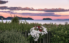 Marahau Sunset (redfurwolf) Tags: newzealand abeltasman nationalpark sunset beach flower water ocean plants nature outdoor landscape island mountains fence clouds sky redfurwolf sony rx100m4 ngc