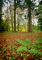 IMG_0616 (bob_rmg) Tags: perrow arboretum tree autumn colour leaves bedale thorp