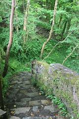IMG_3125 (avsfan1321) Tags: connemaranationalpark connemara nationalpark ireland countygalway green lush landscape plants