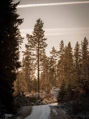 20171115003636 (koppomcolors) Tags: koppomcolors forest skog vinter winter värmland varmland sweden sverige scandinavia