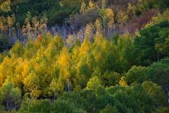 Transition (jojo (imagesofdream)) Tags: california eastern sierra fall