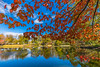 Griffin's pond (julesnene) Tags: canada canon1635mmf4lisusm canon5dmarkiv griffinspond halifax halifaxpublicgardens juliasumangil novascotia autumn autumnleaves fall garden julesnene miniature nature titanic travel wideangle griffin pond ca