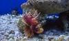 Lion Fish (jasenhigdon) Tags: fish lionfish