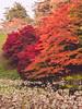 弘前公園 (かがみ~) Tags: aomori panasonic 14140mmii gx8 japan hirosaki 14140ii 弘前 日本 青森 hirosakishi aomoriken jp