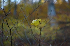 Autumn story (Baubec Izzet) Tags: baubecizzet pentax bokeh leaves autumn nature