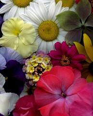 58618.04 bouquet (horticultural art) Tags: horticulturalart flowers bouquet